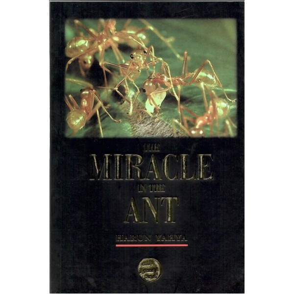 The Miracle In The Ant (P/B)